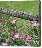 Country Living Canvas Print