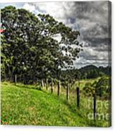 Countryside With Old Fig Tree Canvas Print