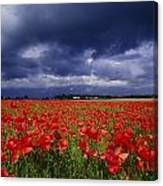 County Kildare, Ireland Poppy Field Canvas Print