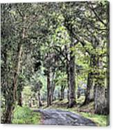 County Roads Canvas Print