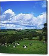 County Tipperary, Ireland, Dairy Cattle Canvas Print
