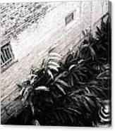 Courtyard Royal Street New Orleans Canvas Print