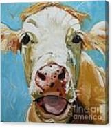 Cow 310 Canvas Print