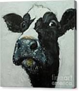 Cow 490 Canvas Print