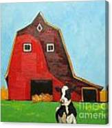 Cow And Barn 4 Canvas Print