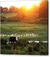 Cow At Sunset Canvas Print