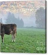 Cow On The Foggy Field Canvas Print