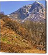 Cowhouse And Snow-capped Mountain Canvas Print