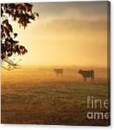 Cows In A Foggy Field Canvas Print