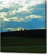 Cows On The Hill Canvas Print