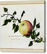 Coxs Apple 1922 Canvas Print