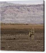 Coyote Badlands National Park Canvas Print