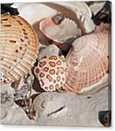 Crab Shell Canvas Print
