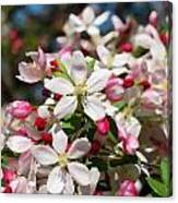 Crabapple Tree Flower Canvas Print