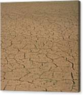Cracked Mud Bed Of Aral Sea Canvas Print