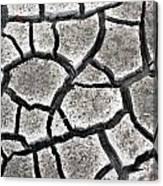 Cracked Mud Canvas Print