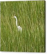 Crane In The Tall Grass On Assateague Island Maryland Canvas Print
