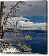 Crater Lake Pine Canvas Print