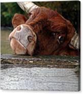 Crazed Look In The Bulls Eye Canvas Print