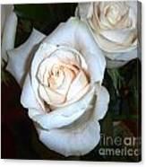 Creamy Roses IIi Canvas Print