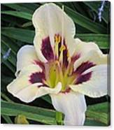Creamy White Lily Canvas Print
