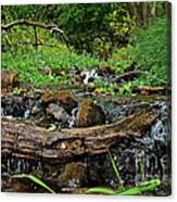 Creek End Canvas Print