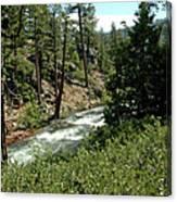 Creek Glen Alpine Creek Canvas Print