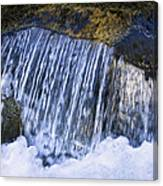 Creek In Mount Rainier National Park Canvas Print