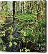 Creek In The Rain Forest Canvas Print