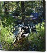 Creek In White Wolf Canvas Print