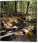 Creek In Woods, Cloughleagh, County Canvas Print