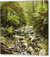 Creek Running Through The Rainforest Canvas Print