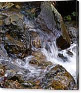 Creek Scene On Mt Tamalpais Canvas Print