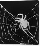 Creepy Spider Canvas Print