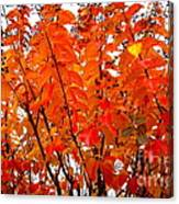 Crepe Myrtle Leaves In Autumn Canvas Print