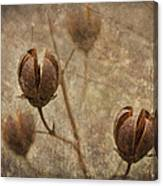 Crepe Myrtle Seed Pods With Grunge And Textures Canvas Print