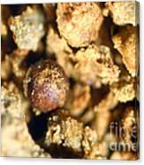 Cretaceous Meteorite Canvas Print