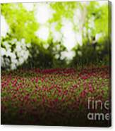 Crimson Clover Canvas Print