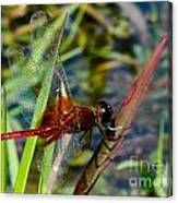 Crimson Dragon Canvas Print