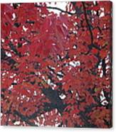 Crimson Leaves Canvas Print