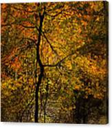 Crooked Tree At Beaver's Bend Canvas Print