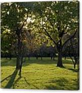 Cross In The Trees Canvas Print