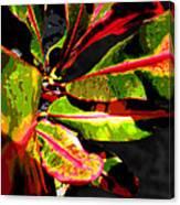 Croton Abstract I Canvas Print