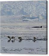 Crowded Shore Canvas Print