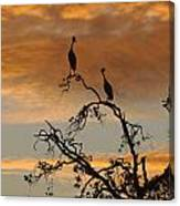 Crowned Cranes At Sunrise Canvas Print