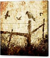 Crows And The Corner Fence Canvas Print