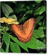 Cruiser Butterfly Canvas Print