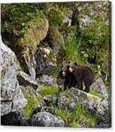 Cubs On A Rock Canvas Print