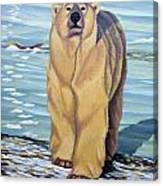 Curiosity - Polar Bear Painting Canvas Print