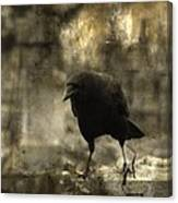 Curiosity Of The Graveyard Crow Canvas Print